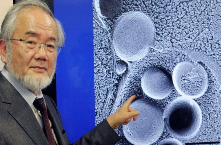 2016 Nobel Tıp Ödülü Otofaji çalışmaları ile Yoshinori Ohsumi'ye verildi