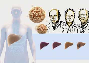 2020 Nobel Fizyoloji veya Tıp Ödülü, Hepatit C virüsü keşfine verildi