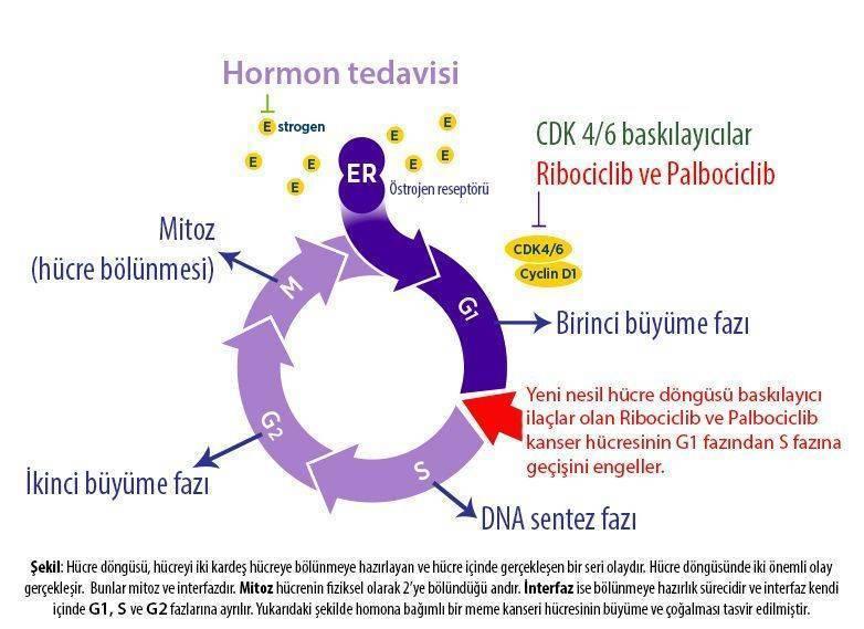 4 evre metastazlı meme kanseri hormon pozitif yeni tedavi ribosiklib ribociclib kisquali palbocicl