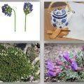 Geven otu Astragalus ve tıbbi etkileri