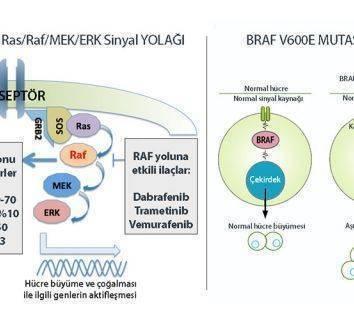 BRAF mutasyonu nedir? Hangi kanserlerde BRAF pozitifliği görülür?
