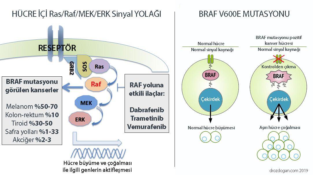 BRAF v600e mutasyonu safra yolu kanserleri
