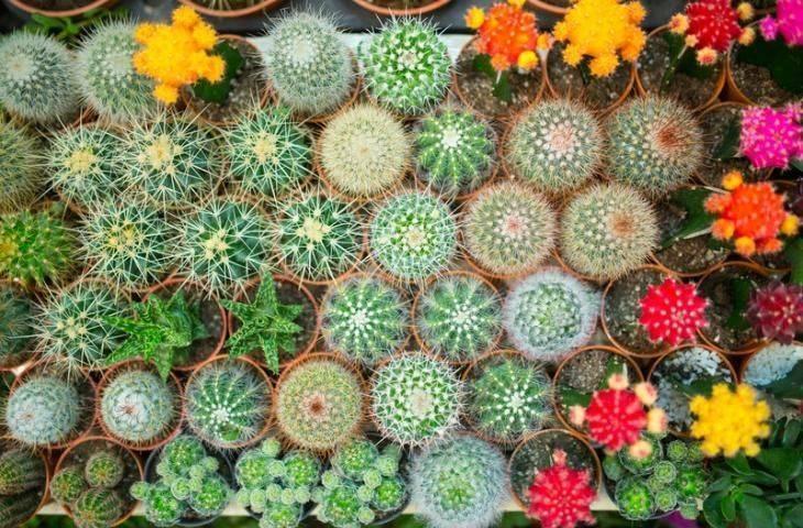 Bağırsak florasındaki çeşitlilik İmmunoterapilerin etkinliğini artırabilir