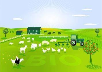 Besin katkı maddeleri, gıda işleme, ışınlanmış gıdalar ve Organik Tarım