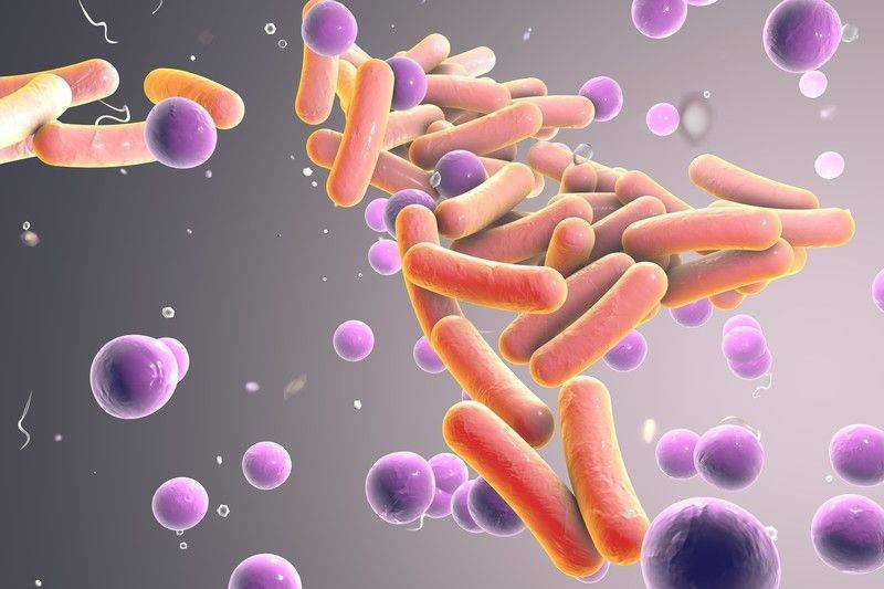 Crispr ile çoklu ilaç dirençliliğine sahip bakteri enfeksiyonlarını tedavi etmek