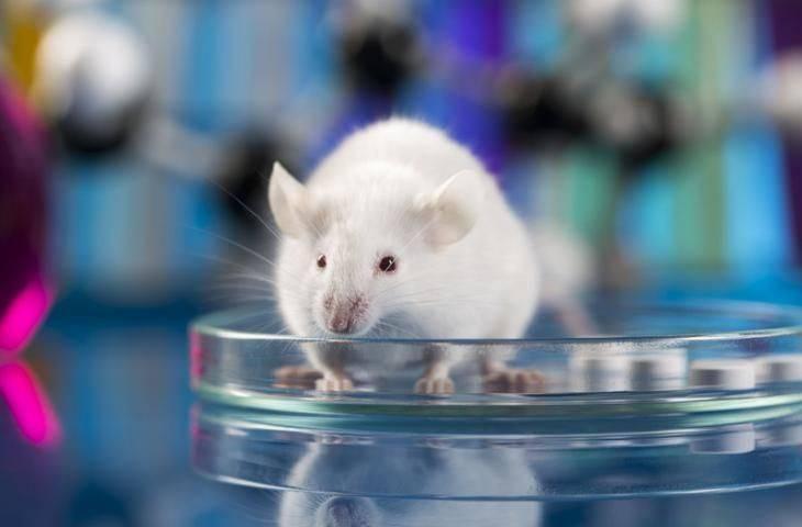 En azından bir Nobel Ödülü farelere verilmeli
