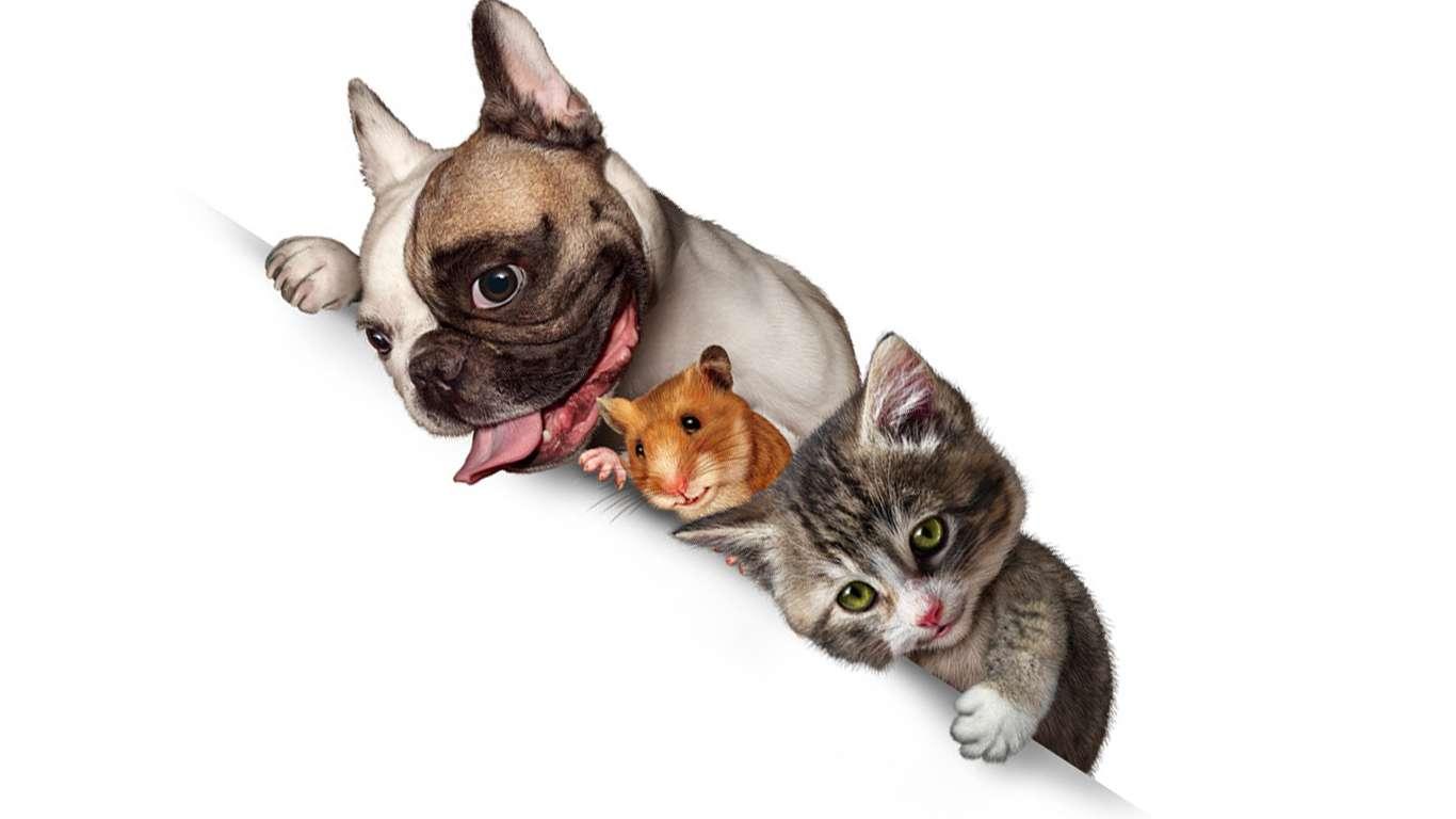 Evcil hayvan terapisinin faydaları nelerdir
