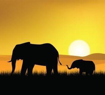 Filler neden kanser olmaz?