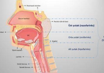 Geniz bölgesinde oluşan tümörler
