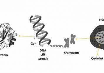 Genom Çalışmaları ile Pankreas Kanseri Yeniden mi Tanımlanıyor?
