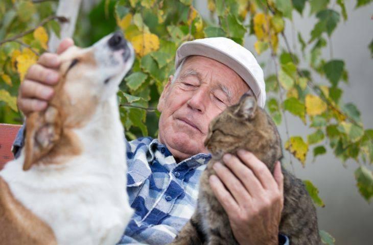 Can dostlarımız evcil hayvanlar kanser tedavisinde yanımızda