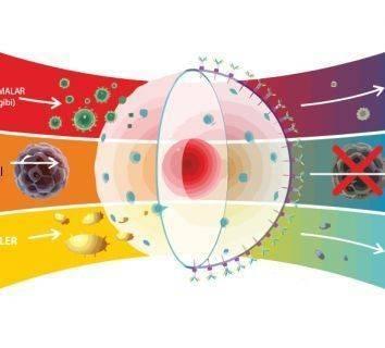 Kalın bağırsak - kolon ve rektum kanserlerinde ısı – hipertermi tedavisi