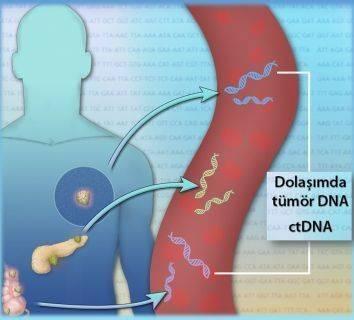 Kan tahlilinde kanser belirtisi: tümör DNA parçaları (ctDNA). Yazı dizisi-3