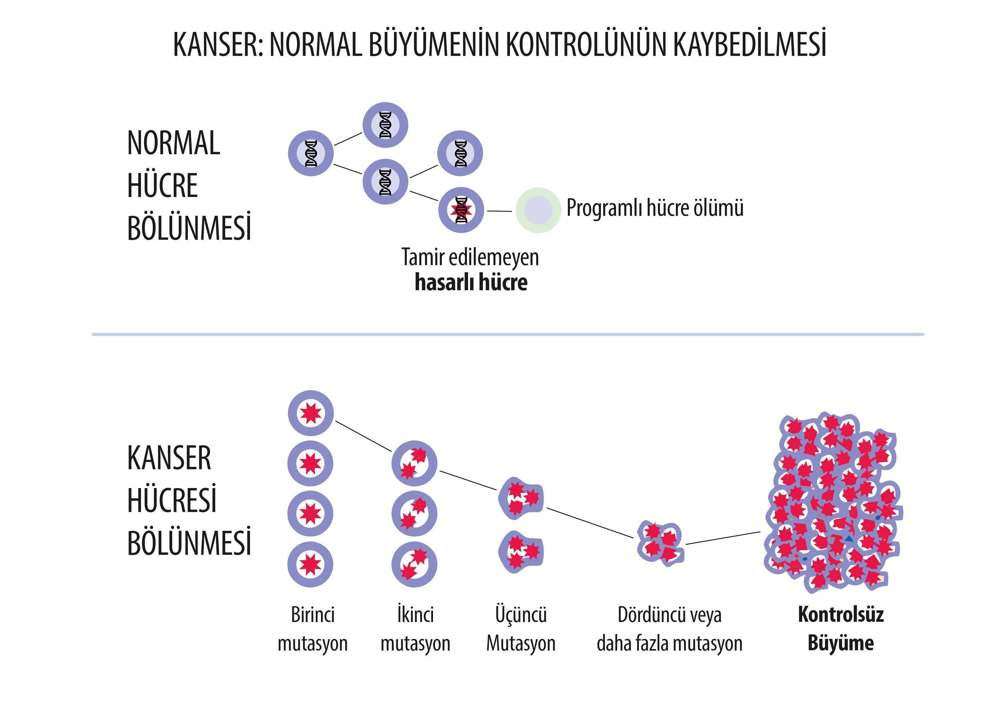 Kanser nedir kontrolsüz hücre çoğalması malign hastalık