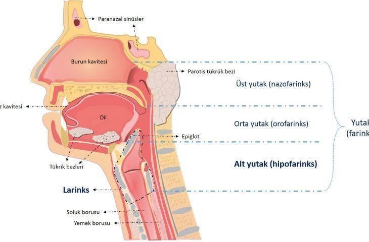 Kanser türlerine göre tanı ve tedavi bölümüne larenks ve hipofarenks kanserleri bölümü eklendi
