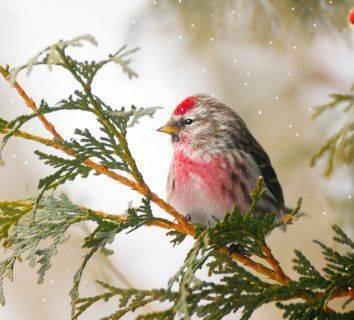 Kanser ve soğuk hava: Hastaların bilmeleri gereken 5 şey