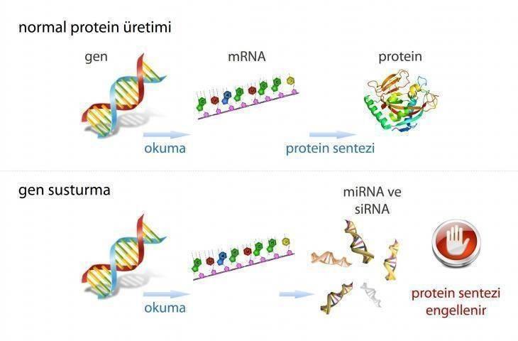 Kansere neden olan genler susturulabilir mi?