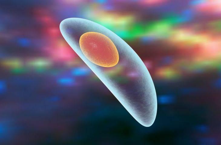 Toksoplazma gondii paraziti kanser ilişkili çok sayıda geni etkiliyor