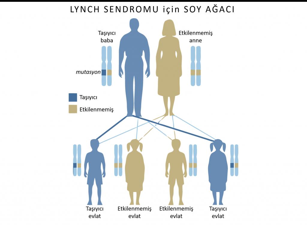 Lynch sendromu kolon kanseri otozomal dominant kalıtsal geçiş soy ağacı pedigri 1024x750