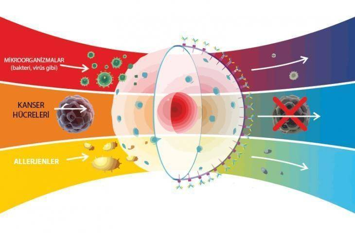 Melanom cilt kanserinde ısı – hipertermi tedavisi