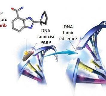 Meme kanseri için yeni bir tedavi: Veliparib - Karboplatin