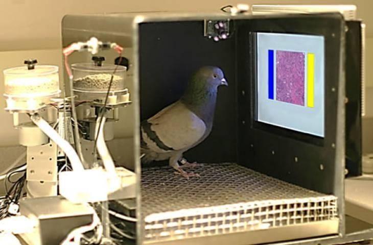 Onkolojiye kuş bakışı: Güvercinler, radyolog ve patologların yerlerine göz diktiler!
