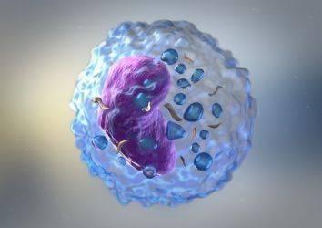 Over (yumurtalık), kolon kanseri, lenfoma, beyin tümörü GBM ve diğer kanserlerde immünoterapi