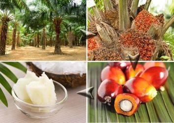 Palm yağı nedir? Kullanım alanları, sağlık açısından yararları ve riskleri nelerdir?