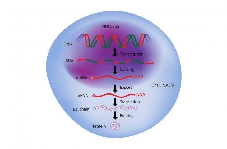 Proteomik: Kanserde Yeni Bir Bilim Dalı