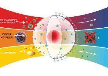 Rahim kanserinde ısı – hipertermi tedavisi