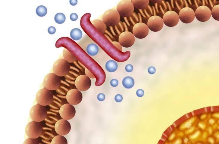 Reseptör nedir? Kanserleşmede ve kanser tedavilerinde rolü nedir?