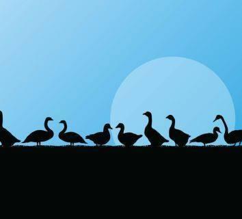 Sağlıklı yağ nedir? Kaz yağı en sağlıklı hayvansal yağ olabilir mi?