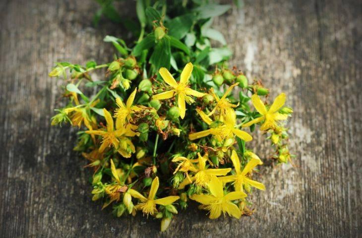 Sarı kantaron çayı ve yağı hangi hastalıklarda denenmektedir?