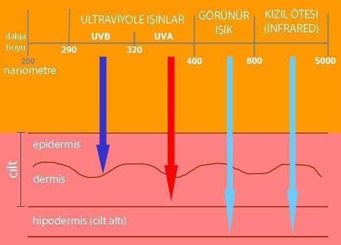 UVA ve UVB ışınları ultraviyole cilt yanıkları deri kanseri ışık spektrumu