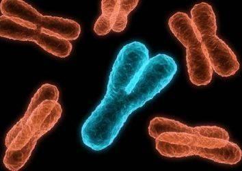 Y kromozom kaybı: erkeklerde daha kısa yaşam beklentisi ve daha yüksek kanser riski ile ilişkili olabilir mi?