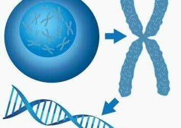 Yazı dizisi: Telomer ve Kanser ilişkisi 3. Telomer odaklı kanser araştırmalarında son gelişmeler