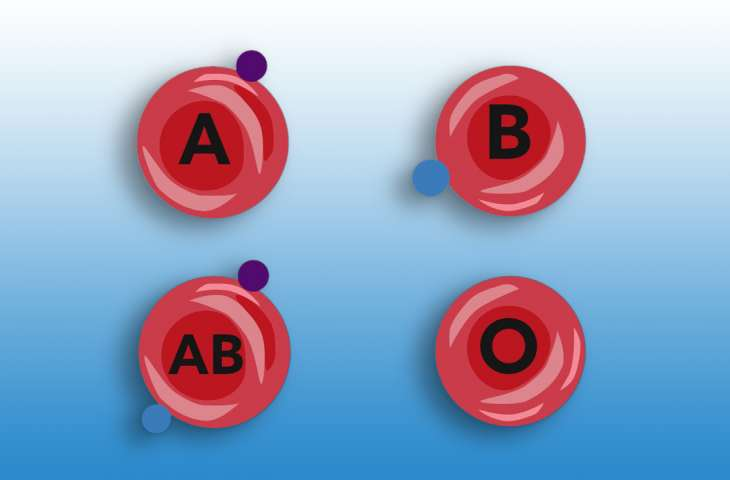 İnsan bağırsağında A kan grubunu 0'a çeviren enzim keşfedildi