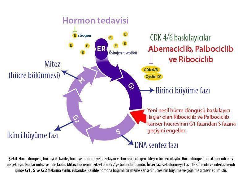 abemaciclib verzenio 4 evre metastazli meme kanseri hormon pozitif yeni tedavi