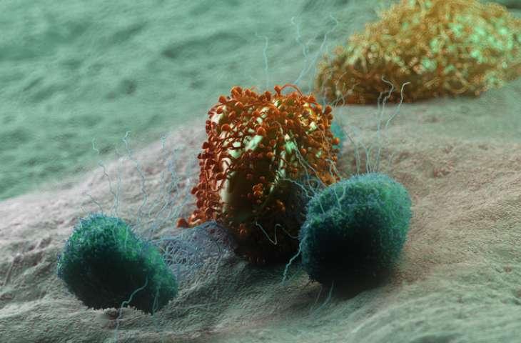 Abskopal etki: Bağışıklık sisteminin gizli gücü ile kanser tedavisi – Gerçek mi abartı mı?