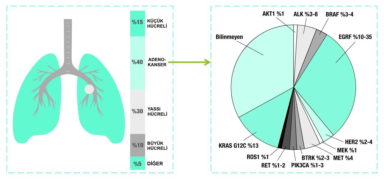 akciğer adenokanser alt türleri