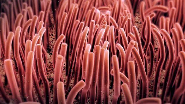 akciğer siliaları