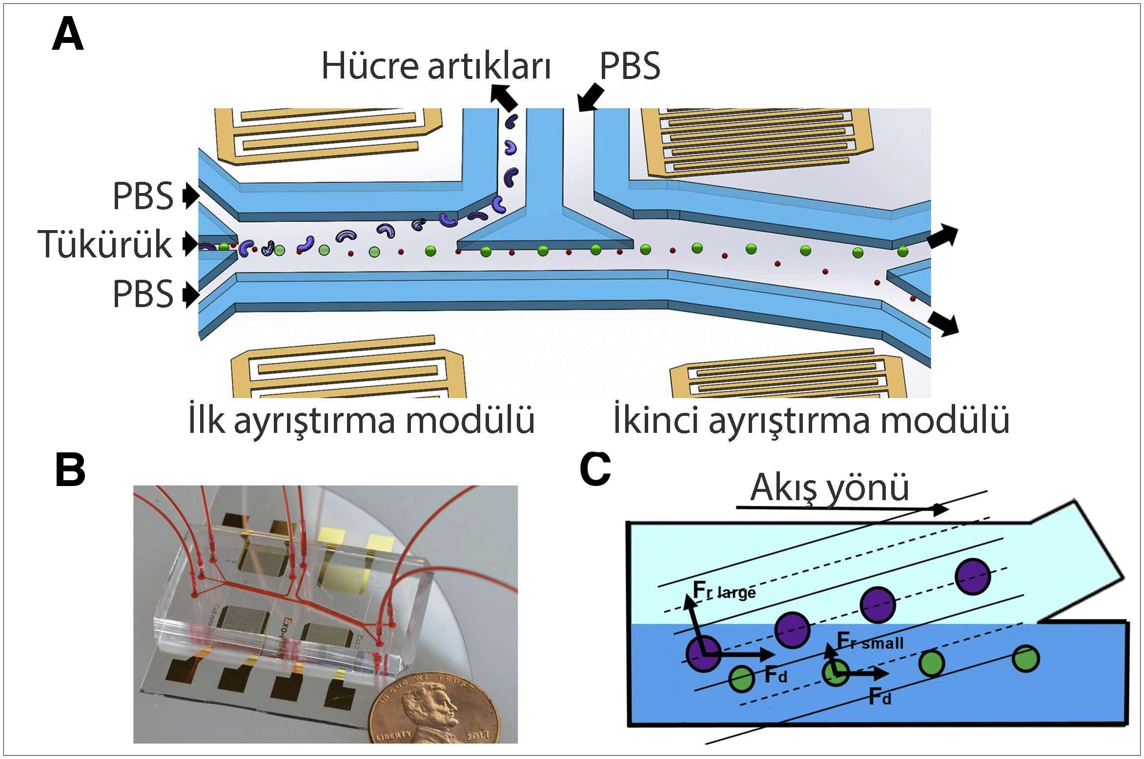 akustofluidik teknik ile hpv tanısı şematik ve mekanizma