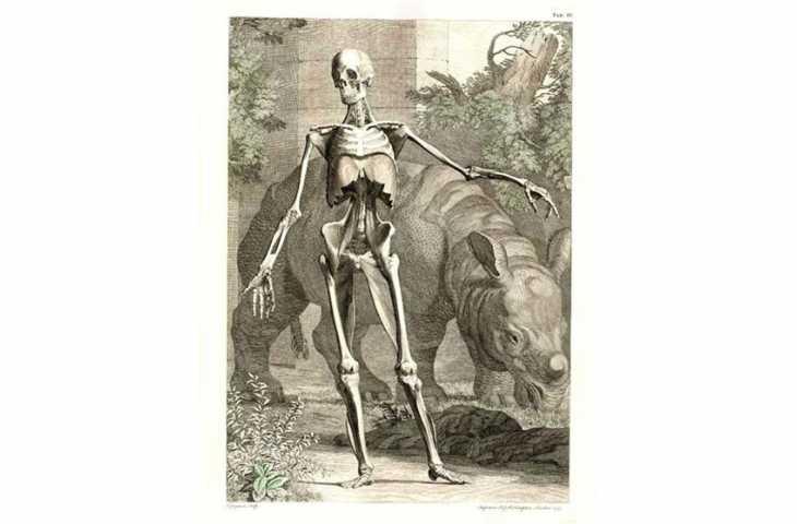 Albinus ve İnsan Vücudu Tabloları 1747 – O zamana kadarki en güzel anatomi tasvirleri