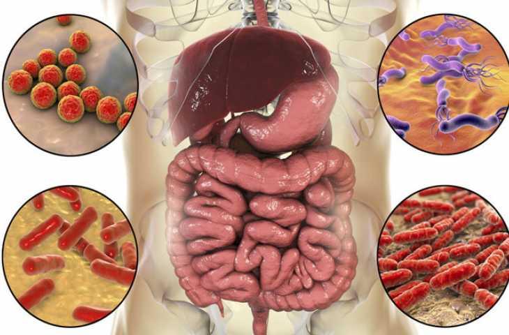 Bağırsak bakterileri sağlık için neden çok önemli? Mikrobiyota sağlığı test edilebilir mi?