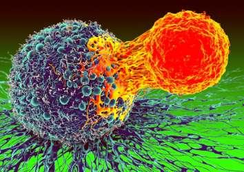 Baş-boyun kanserleri için yeni bir immünoterapi yöntemi