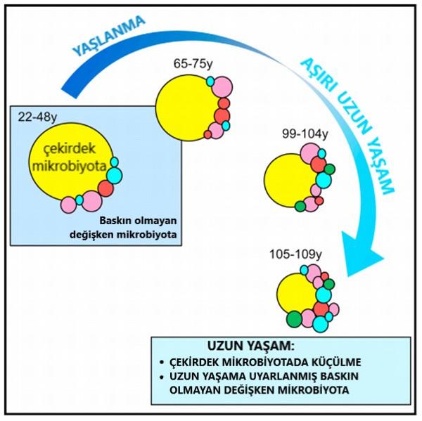 baskin olmayan degisken mikrobiyota