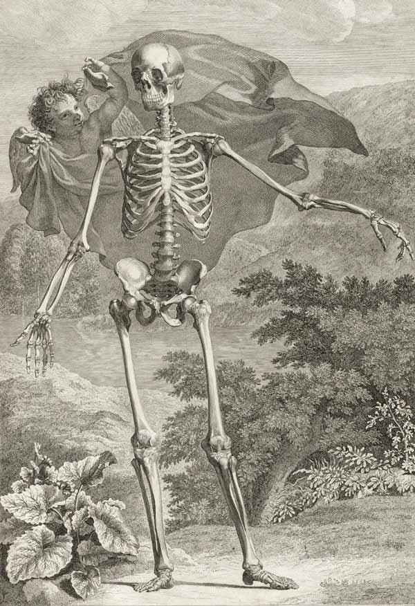 Bernard Siegfried Albinus Engraving Tabulae sceleti et anatomi cizimleri