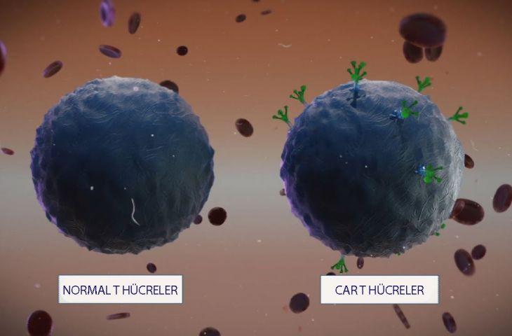 CAR T hücre immünoterapisinin organ kanserlerinde kullanımında önemli gelişmeler