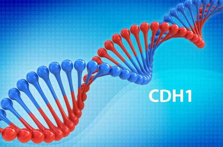CDH1 gen mutasyonu nedir? Hangi kanserlerin riskini artırır?