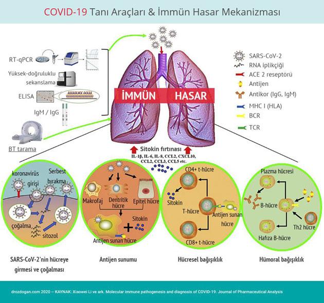 covid 19 tani araclari immun hasar mekanizmasi